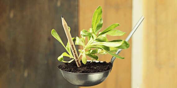 Rastúce ceruzky a živé pohľadnice Sprout: Polievajte a zmenia sa na kvet či bylinku/Slovensko