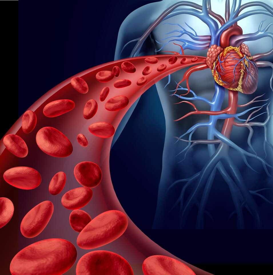 Nakopnite si krvný obeh pomocou Sonotherapie – vyšetrenie a liečba cievneho systému