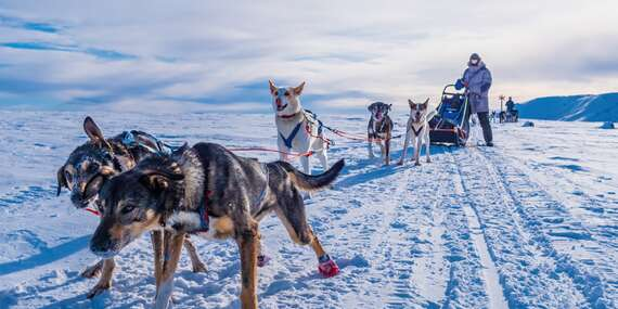Nevšední zážitek v podobě denní či noční jízdy na psím spřežení až pro 2 osoby v délce 60 nebo 90 minut / Kaliště