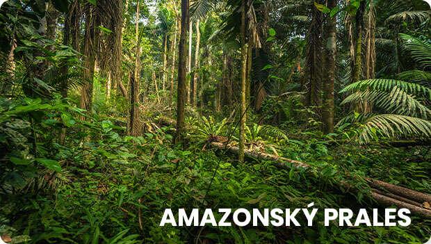 Amazonsky prales