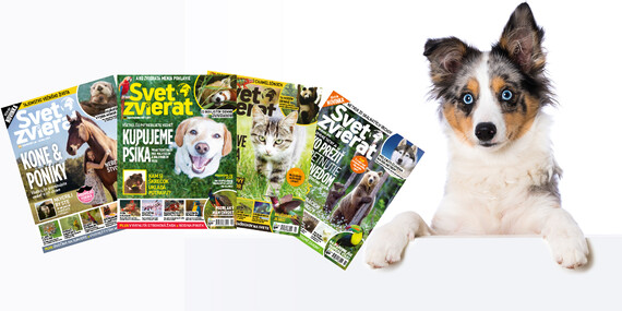 Ročné predplatné časopisu Svet zvierat / Slovensko