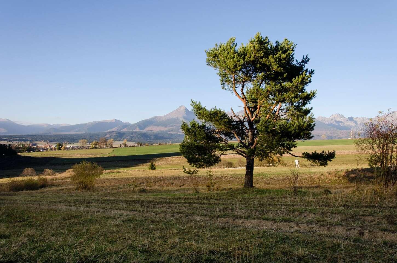 Relax v útulnej Vile Rhea pod panorámou Vysokých Tatier v tichej dedinke Važec