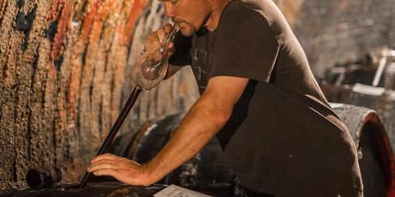 Neomezená konzumace vín a řízená degustace v Apartmánech nad sklepem ve Velkých Pavlovicích/Jižní Morava - Velké Pavlovice