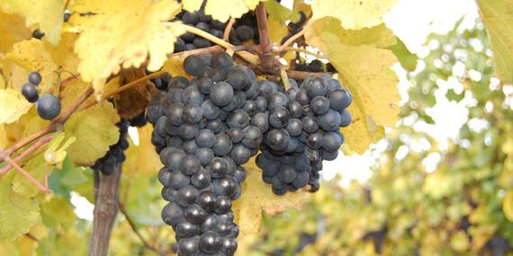 Pobyt vo dvojici na Južnej Morave s ochutnávkou kvalitného vína a domácich dobrôt/Česko - Južná Morava - Znojmo