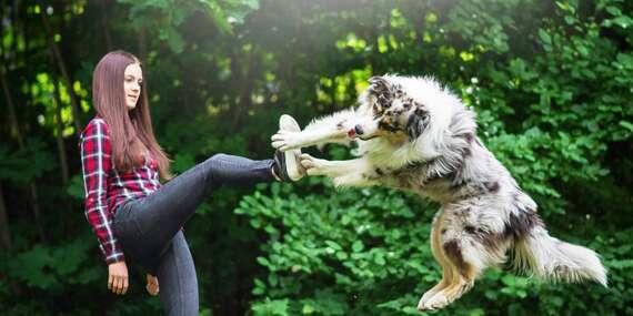 Online kurz základní poslušnosti vašeho psího miláčka + 2 dárky jako bonus/ČR