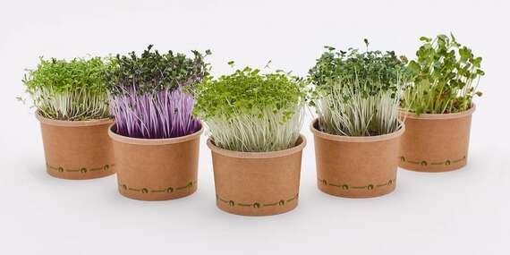 Domáca sada na pestovanie microgreens – vlastné čerstvé bylinky a mikrozelenina/Slovensko