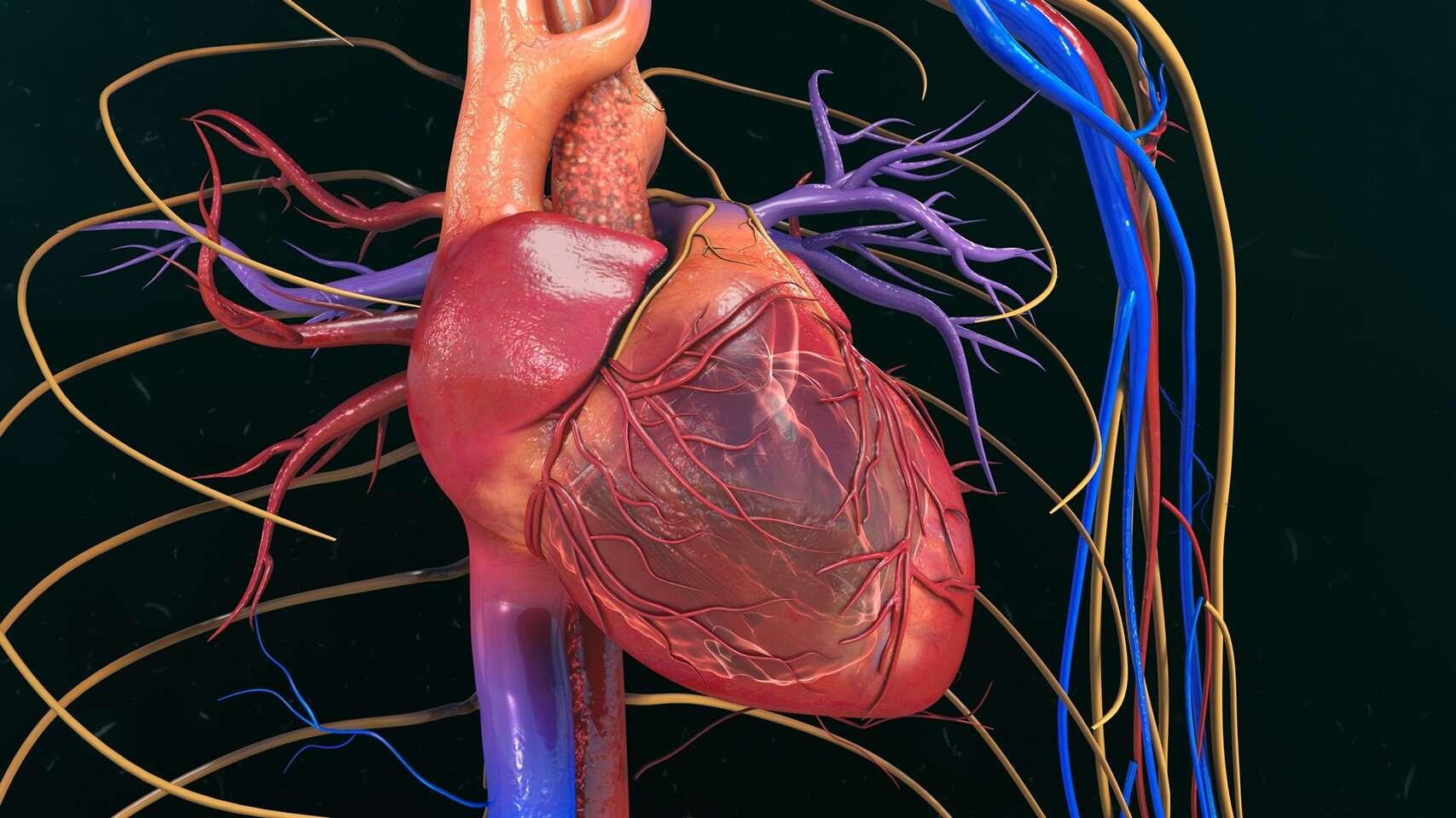 Vyšetrenie ciev artériografom – prevencia srdcového infarktu a m...