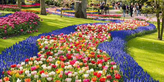 Holandsko – svetoznáma výstava kvetov Keukenhof aAmsterdam/Holandsko